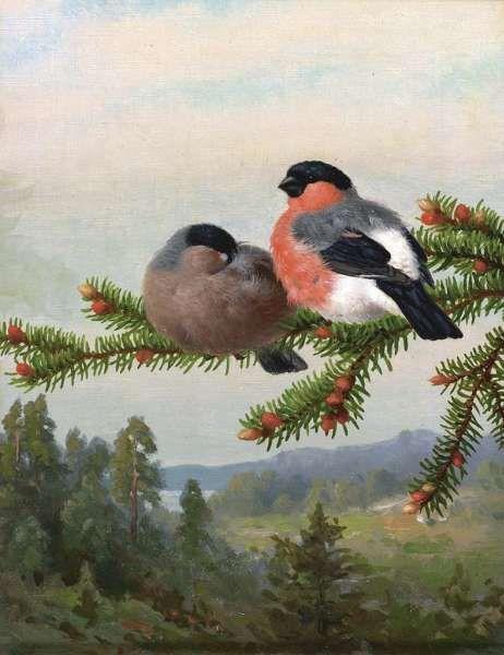 """""""Punatulkut oksalla"""" 1891 Ferdinand von Wright"""