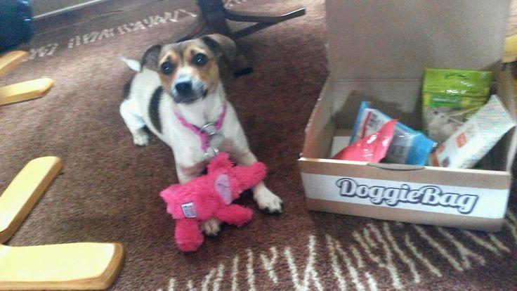 Zafira - DoggieBag.no #DoggieBag #Hund