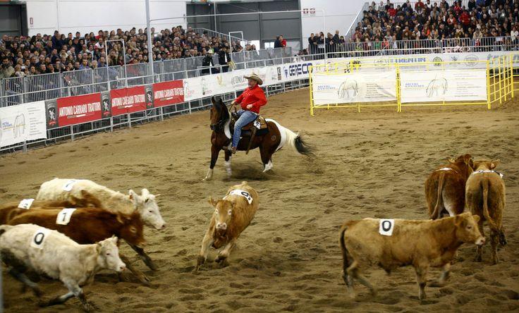 Il #Westernshow di Fieracavalli 2014 #horses