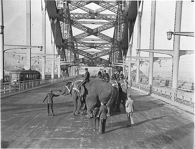 Six Wirths' Circus elephants with their attendants and a Shetland pony crossing the Sydney Harbour Bridge for publicity, 3 April 1932 / Sam Hood From the collection of the State Library of New South Wales www.sl.nsw.gov.au http://acms.sl.nsw.gov.au/item/itemDetailPaged.aspx?itemID=9971