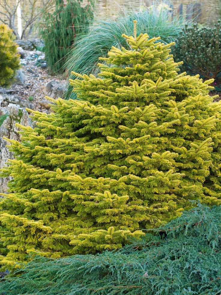 17 best images about front yard conifer ideas on pinterest for Choosing plants for landscaping