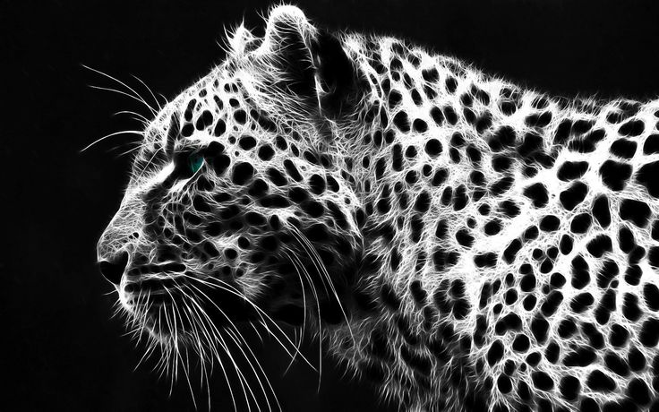 Latest 1920x1200 px Full size leopard image by Crockett Backer for - pocketfullofgrace.com 7