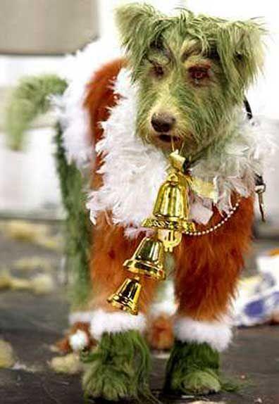 Grinch Terrier