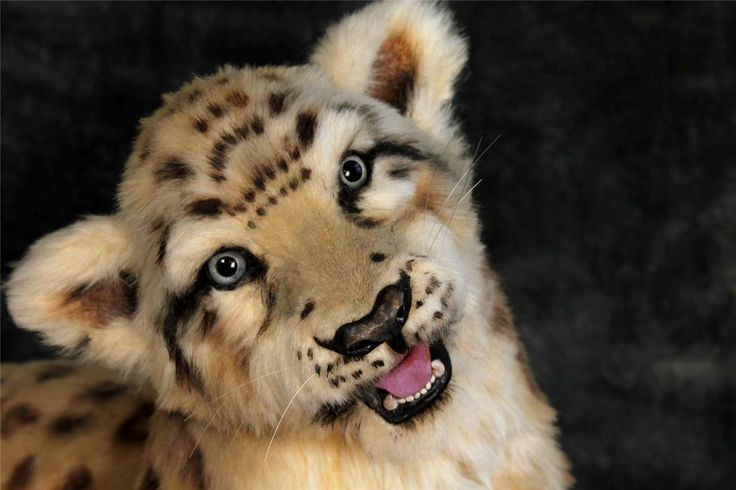 Pawtrait bears O.O.A.K  Large  Realistic Snow Leopard cub  with open/close mouth