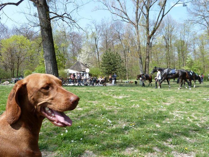 Fabulous Ausflugsziele mit Hund in Deutschland Bayern M nchen Englischer Garten Tierisches Vergn gen im