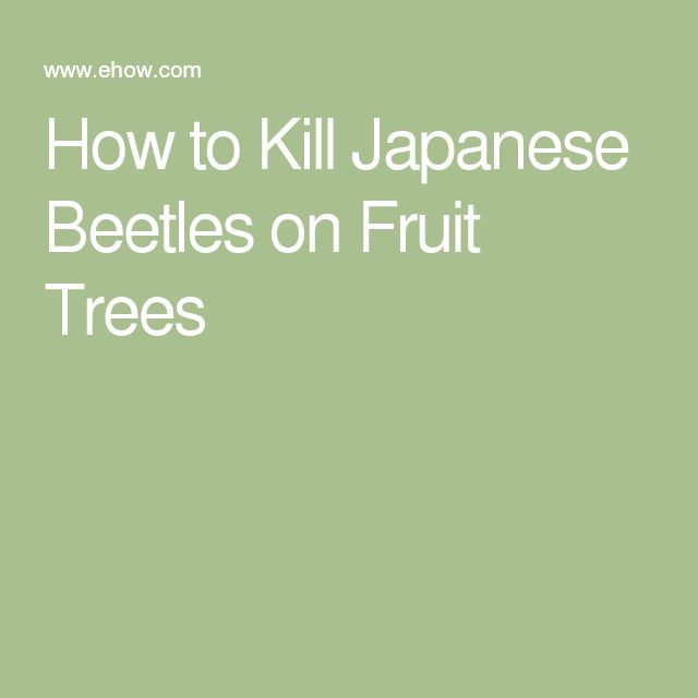 How to Kill Japanese Beetles on Fruit Trees