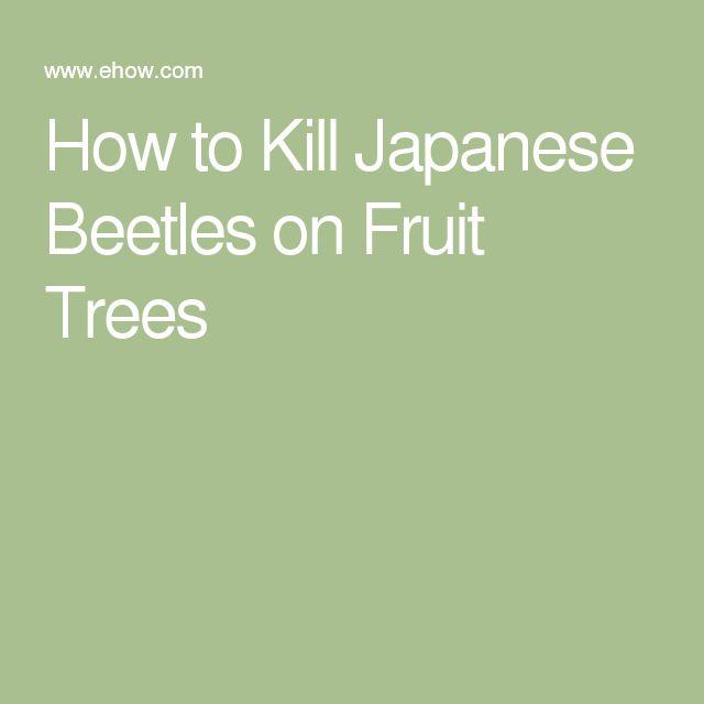 How to Kill Japanese Beetles on Fruit Trees