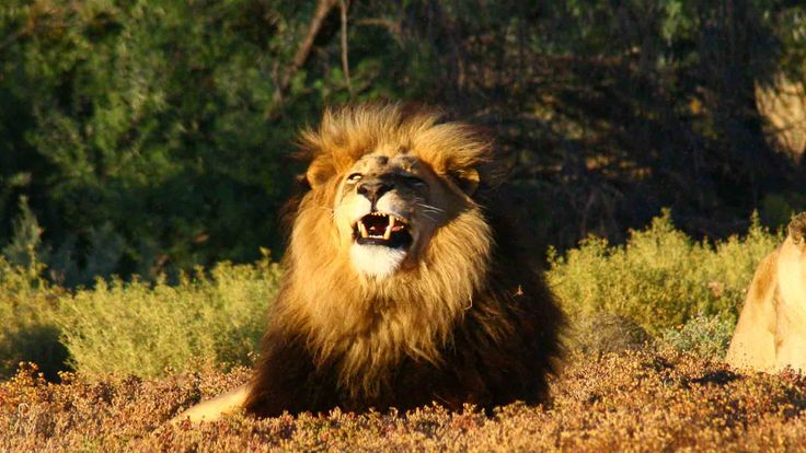 ROARRRRRR!!!!!!!!!!!! #Its The Weekend... Will you be visiting me?