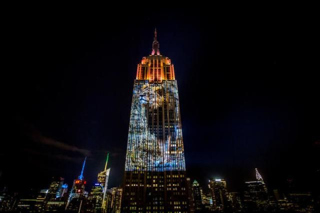 Cecil The Lion And Other Endangered Animals Light Up The Empire State Building - Explore like a Gipsy, Study like a Ninja
