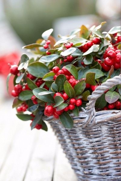 Die 25+ Besten Ideen Zu Winterpflanzen Auf Pinterest Pflanzen Garten Im Winter