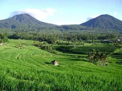 jatiluwih bali truly marvelous landscape