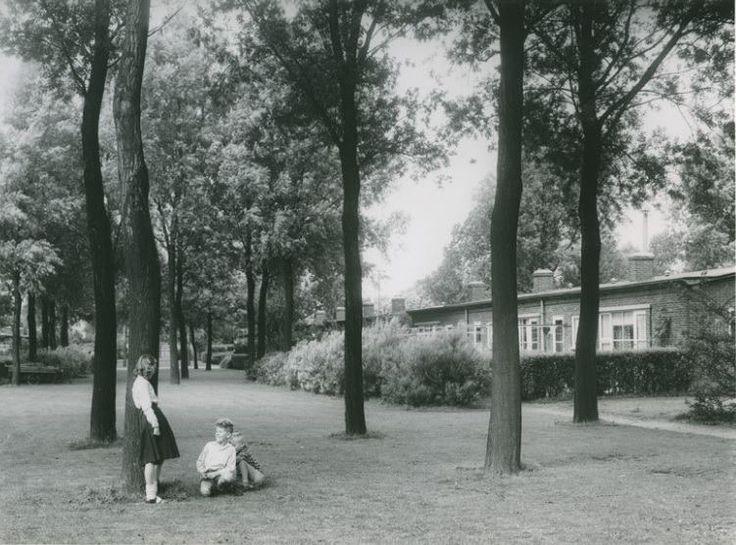 Rotterdam - Rollostraat in de Wielewaal met spelende kinderen, 1958.