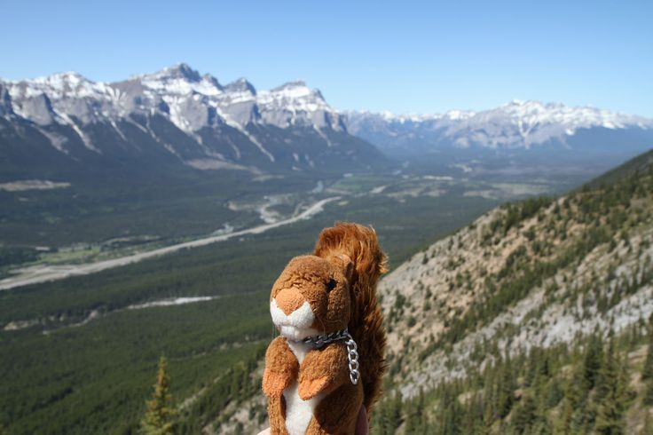 https://flic.kr/p/G4CkUd | Mt Lady MacDonald | Dexter hiked up Mount Lady MacDonald above Canmore yesterday. His little legs hurt a little bit today :-)