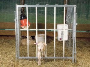 Lamb Creep Feeder Plans For Pinterest Goats And Sheep