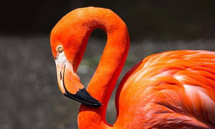 """On the cover of evolutionary biologist Stephen Jay Gould's book """"The Flamingo's Smile,"""" there's a strange image that looks like the legless body of a ..."""