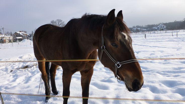 winter, snow, a horse