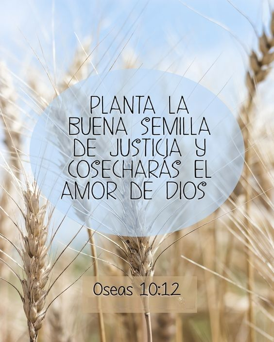 << Planta la buena semilla de justicia y cosecharas el amor de Dios >> Óseas 10:12