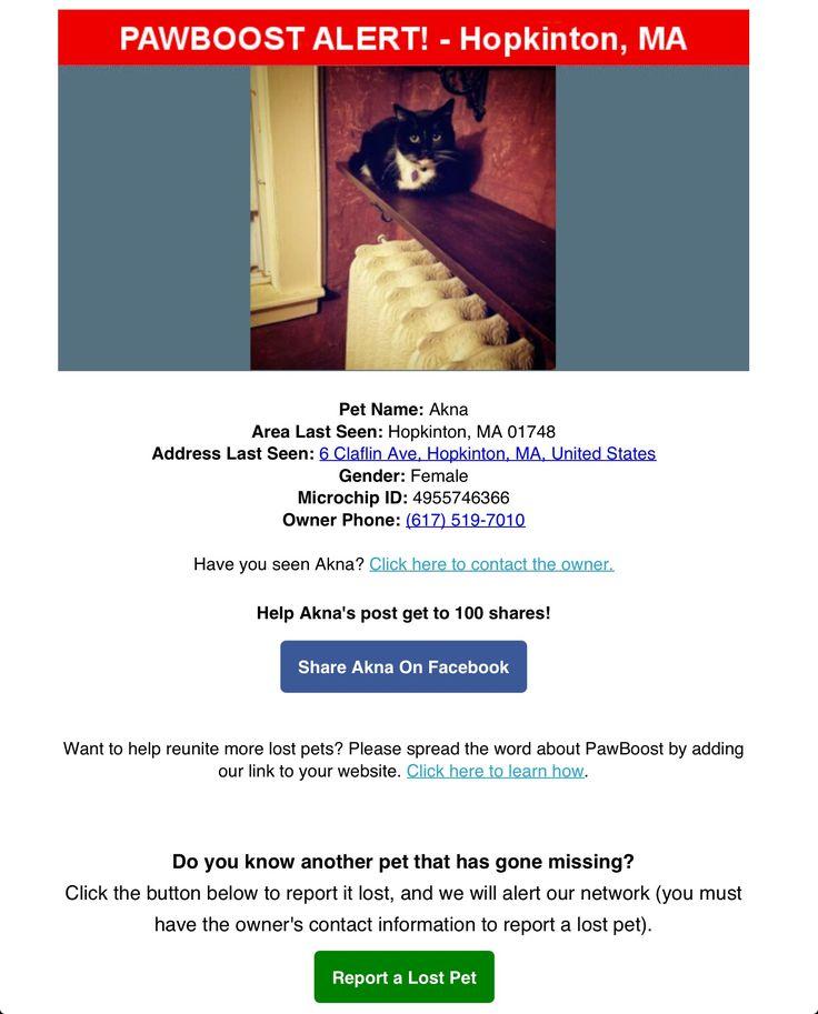 Lost Cat Named Akna: Hopkinton, MA
