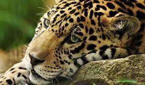 Afbeeldingsresultaat voor jungle amazone