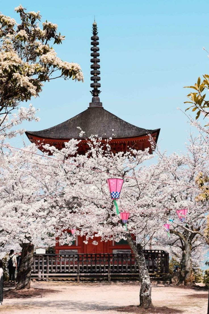Sakura Japan Guide To Enjoy The Cherry Blossom Festival Spring 2021 Japan Cherry Blossom Festival Cherry Blossom Japan Cherry Blossom Festival