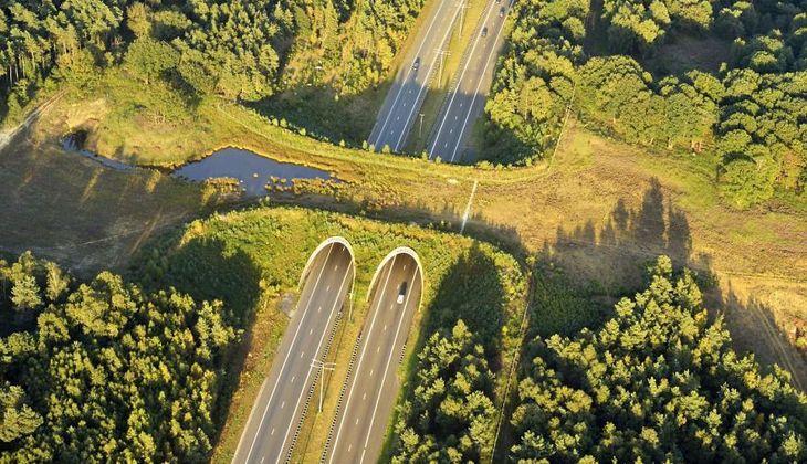 20 Ingeniosos Puentes Para Animales. | Naturaleza - Todo-Mail. Cruce para animales salvajes, Bélgica.