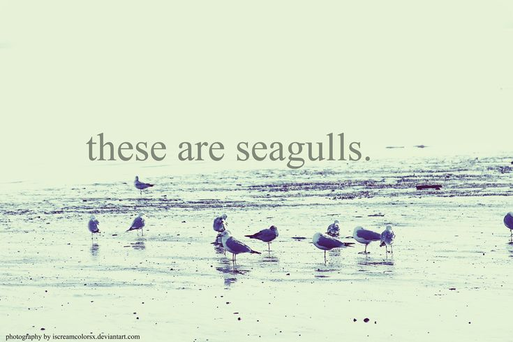 mock motivation motivational poster seagulls nature inspirational quote