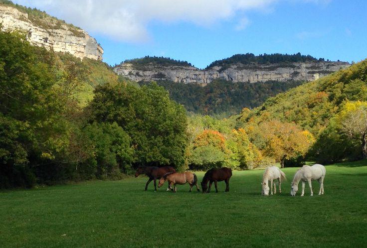 Les chevaux libres du Chambon