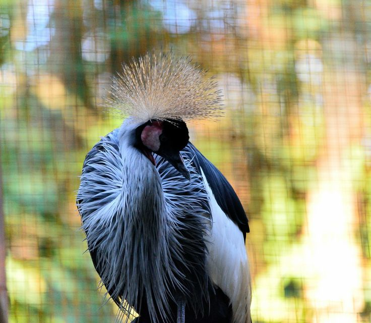 Exotic bird by Welbis Pestana on 500px