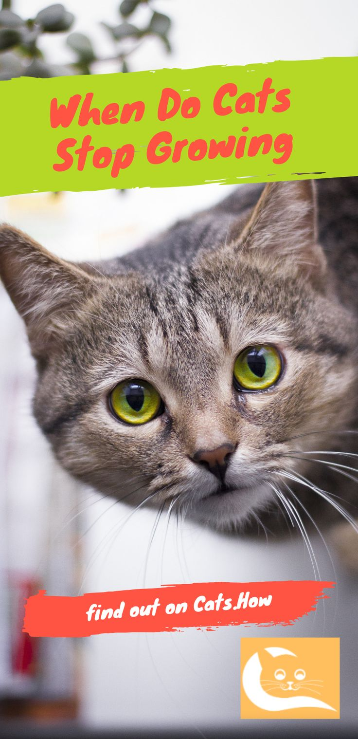 When Do Cats Stop Growing Cats, Cat facts, Cat care