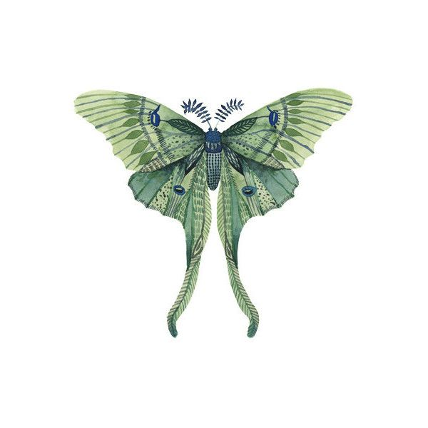 Watercolor Luna Moth tattoo Pattern Tattoo Temporary Tattoo wrist ankle body sticker fake tattoo ($2.95) found on Polyvore featuring women's fashion, accessories and body art