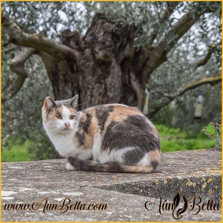 Esta comprobado que cuando se acaricia a un gato la Ansiedad disminuye!  https://aunbella.com/    #followme #español #AunBella