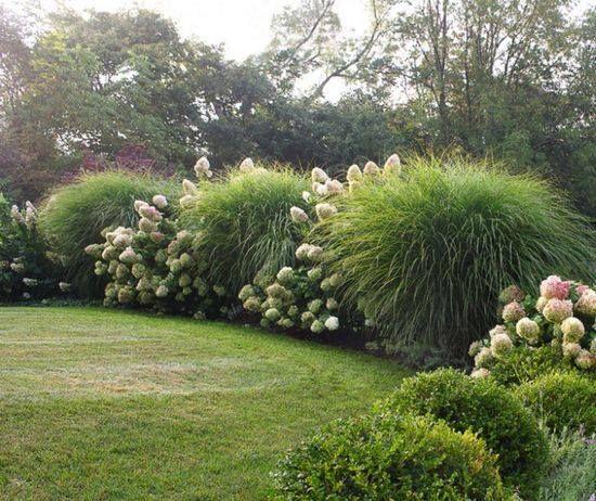 Ornamental grasses and hydrangeas