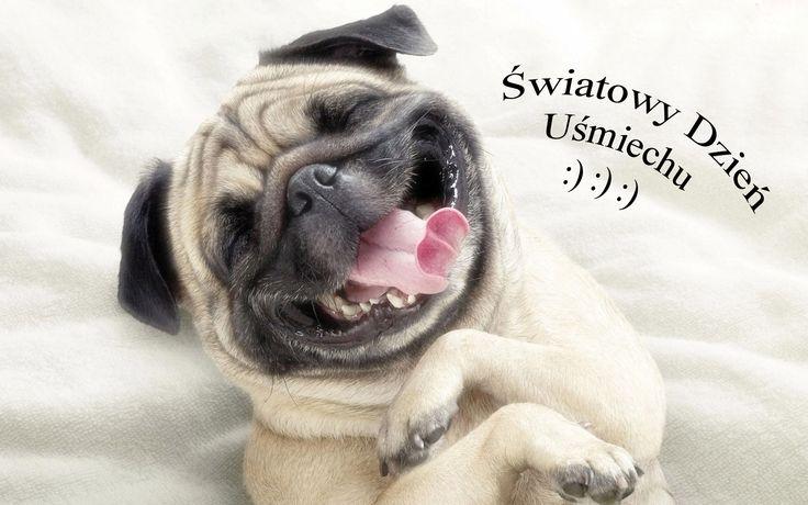 piesek-usmiech-kocyk-jezyk.jpg (1920×1200)