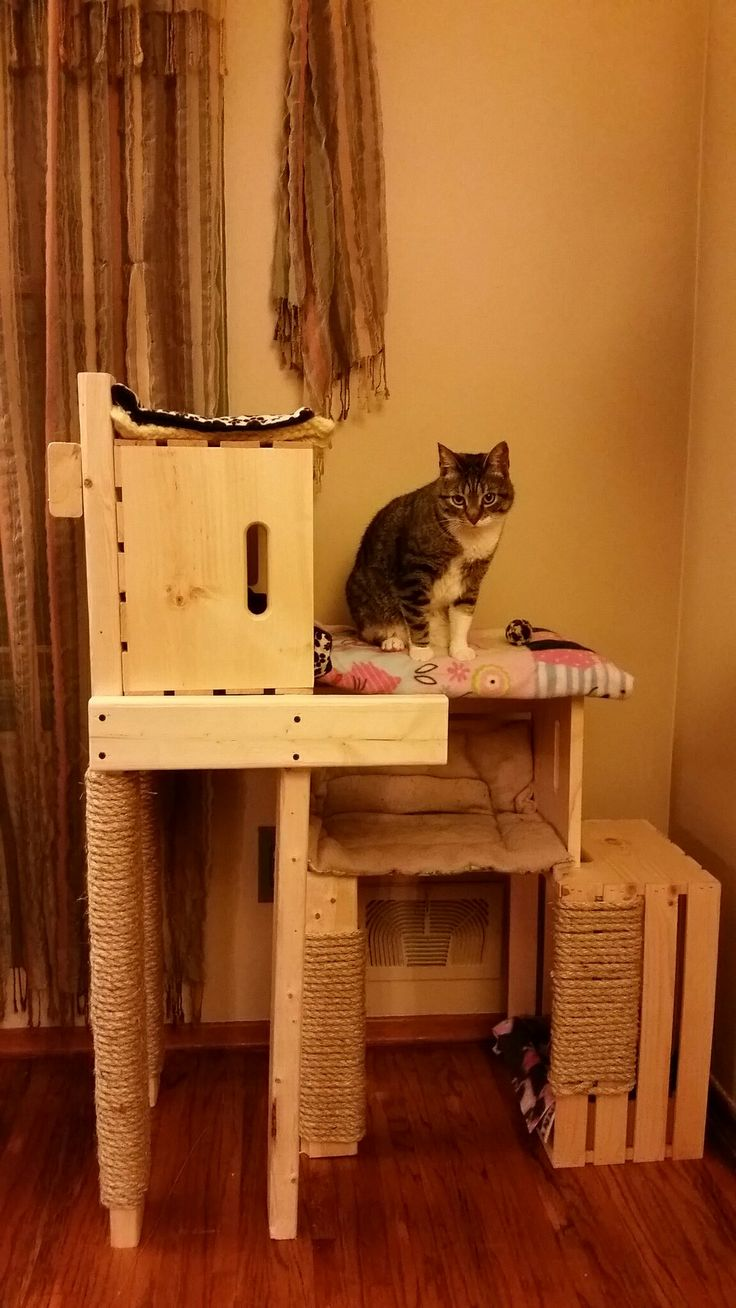 Best 25 Homemade Cat Trees Ideas On Pinterest Homemade