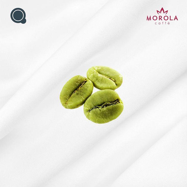 Cialda Morola Caffe Verde Morola Caffè