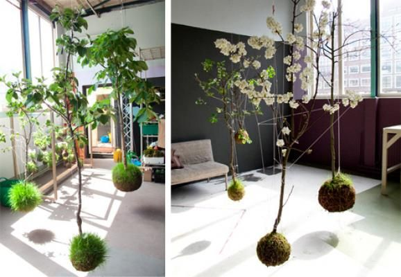 Japanse reeks tuinen | ScienceDump