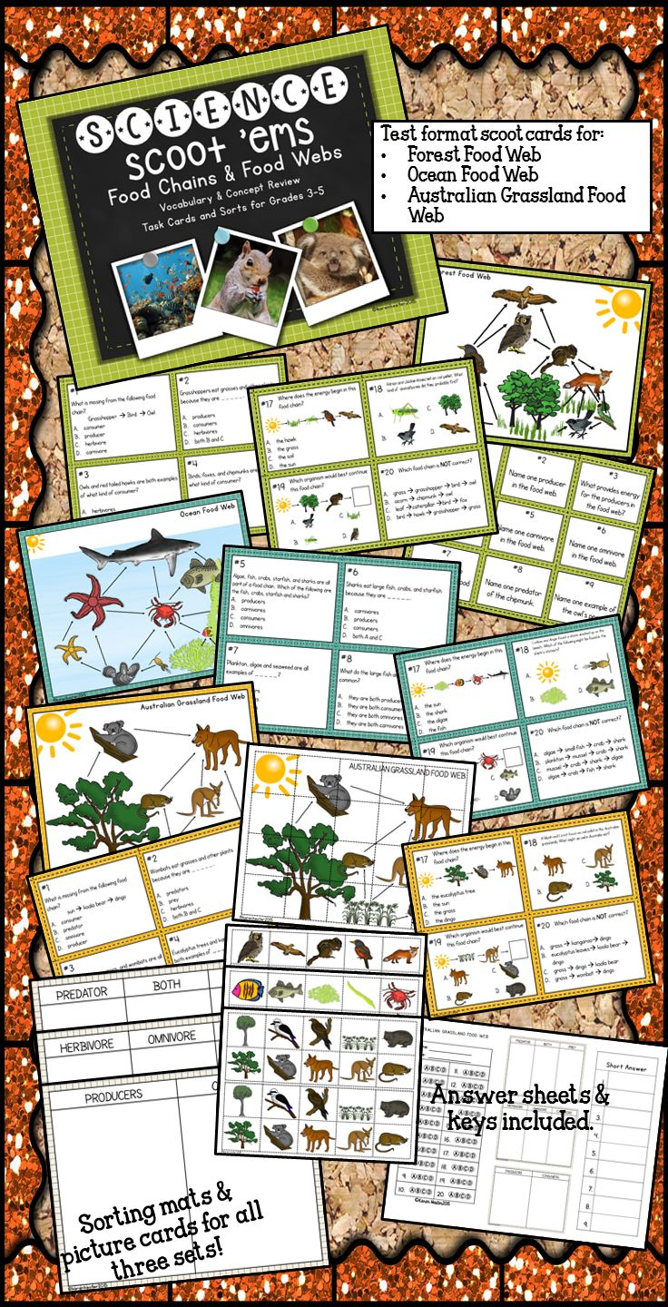 Ecosystems lesson plans high school