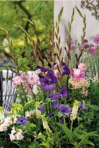 Balkon tuin met gladiolen