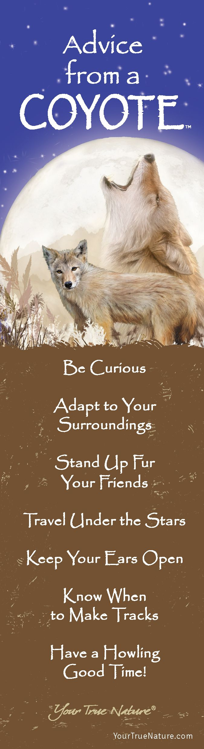 """Mothering Advice from a Coyote: """"Keep your Ears Open."""" Your True Nature"""