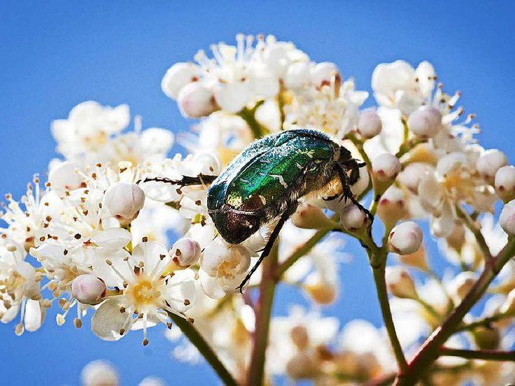 In Deutschland sterben viele Insektenarten aus