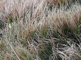 That grass.