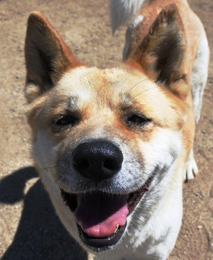 Park Art|My WordPress Blog_Japanese Akita Puppies For Sale In California