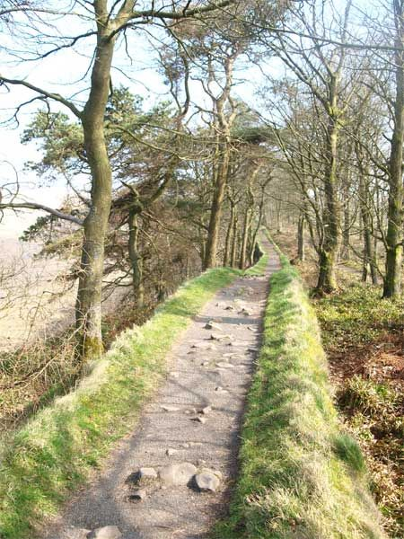 Hadrian's Wall Walk, here you can walk along a length of the actual Wall, passing through the wood and when you come to the end you are at Housesteads Fort (Vercovicivm) Northumberland, England. Full info about the walk here