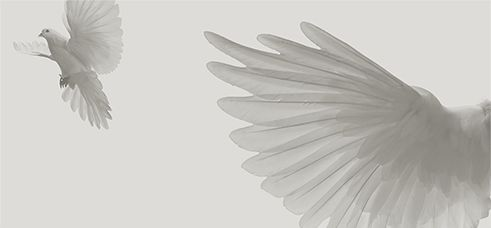 A design concept that incorporates botany, ornithology, etc.