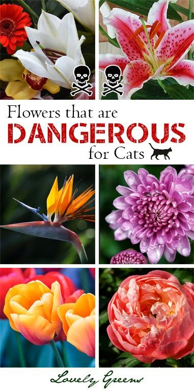 Some flowers used by florists are toxic to cats - Lilies being the most poisonous! Learn more about which ones to avoid in bouquets for cat owners #cats