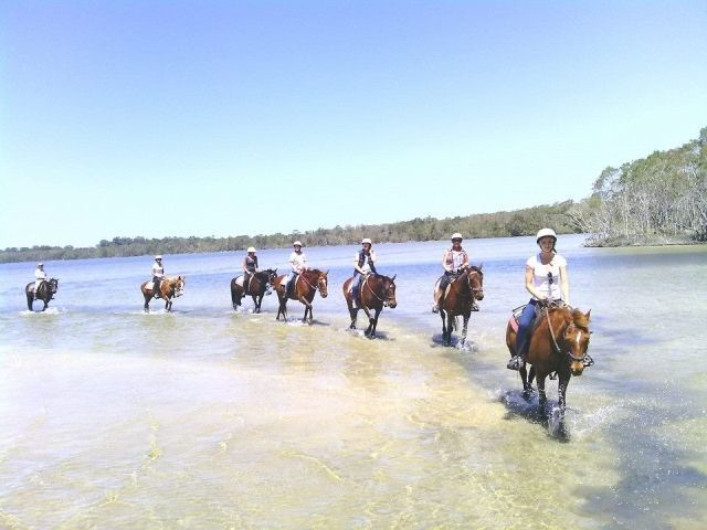 noosa horse riding, eumarella, weyba lake, sunshine coast