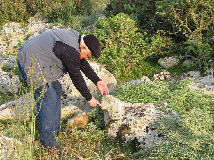 Altipiano della Giara, Sardegna: la pecora del Cancedda