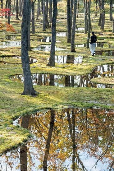 Reminds Me Of The Magicians Nephew Water Garden By Junya