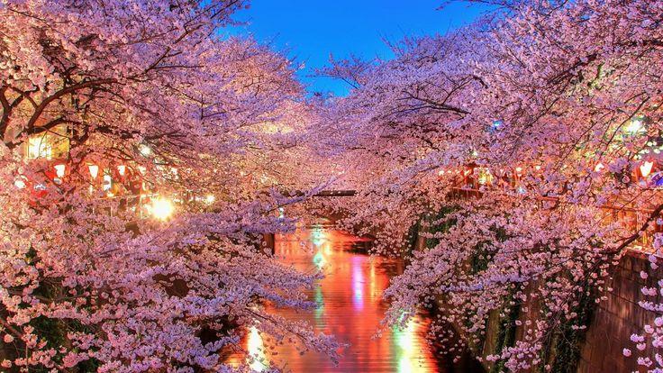 【保存版】東京で花見がしたい!都内で桜が美しい名所16選 - Colors(カラーズ)