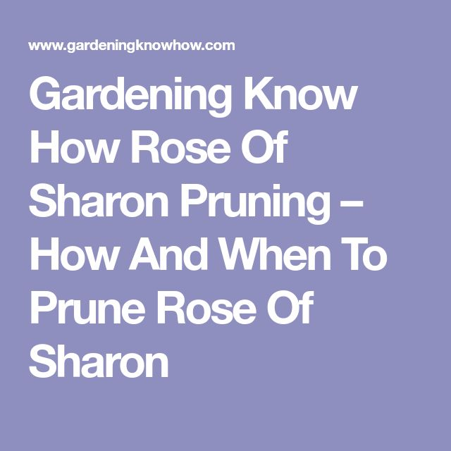 Gardening Know How Rose Of Sharon Pruning – How And When To Prune Rose Of Sharon